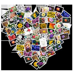 FigrCollage 2.7.2 - 照片自定义拼接制作工具