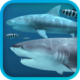 Sharks 3D - 海洋鲨鱼动态桌面壁纸